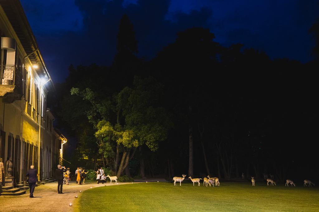 Un branco di cervi si posiziona in coda per partecipare al ricevimento di Villa Orsini